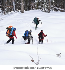 Ukraine, Osmoloda- February 11, 2018 : A group of tourists in a winter forest glade at the beginning of the ascent to the top of the Oval. Carpathians