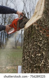 Ukraine. Transcarpathia - 2017: chop the tree on a chopping competition