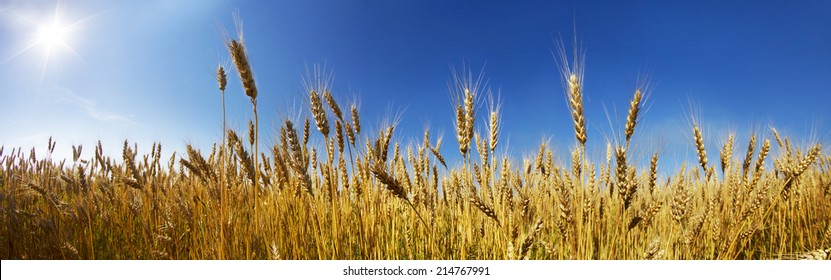 In Ukraine, the wheat polarization is a symbol against the clear sky, they have a color of the national flag. Our coun- one of largest grain exporters in the world. Produce bread- respected profession