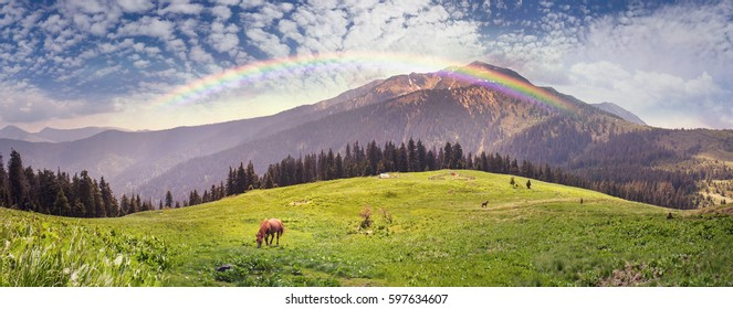 Ukrainian Alps - the mountain range Marmarosh on the background of grazing horses Hutzul mountaineers. Fresh green grass ecological food in the subsistence farming of farmers