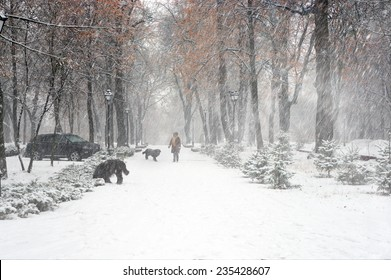In the Ukrainian capital, a large space is occupied by parks and forests and groves, in which like walking women with children, lovers, young people, older people-grandparents and walk their dogs pets