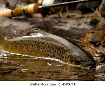 UL lure fishing/Brown Trout/small river in Midlands, Co. Meath, Ireland