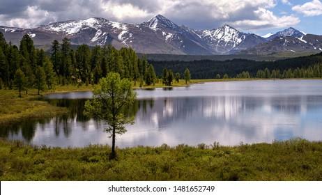Ulagan lake Cicely, Altai, Russia, June