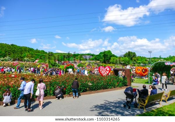Ulasan, South Korea – May 2018 : Many tourists traveling Rose festival in Ulsan Grand Park, Ulsan South Korea on May 19, 2018