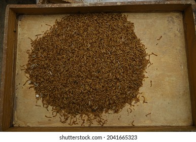 Ulat hongkong or Mealworms are the larval form of the mealworm beetle, Tenebrio molitor, a species of darkling beetle.