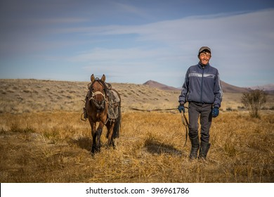 ULGII, MONGOLIA - CIRCA OCTOBER 2015: man is walking and smiling with a horse beside him
