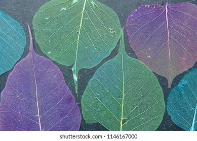 Ultra violet and green dry leaves on a black background