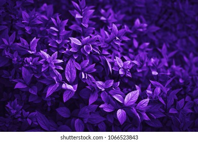 Ultra violet leaves nature abstract background