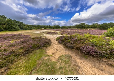 Ultra wide angle shot of Nature reserve near Schipborg in Drentse Aa National Park with blooming heath, sand, grass, clouds and blue sky