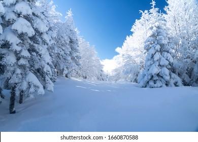 Uludag winter landscape snow forest background