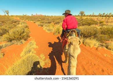 Uluru, Northern Territory, Australia - Aug 22, 2019: Uluru Camel Tours: experience outback adventure with camel through Uluru Ayers Rock landscape on sand dune lookout. Red Centre, Central Australia.