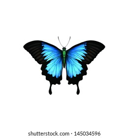 Ulysses Butterfly (Papilio ulysses), belongs to the swallowtail butterfly family or Papilionidae and is endemic to Australasia.