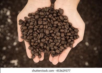 umber, burnt umber, coffee berry, coffee bean, chocolate, coffee tree, deep brown, coffee, java