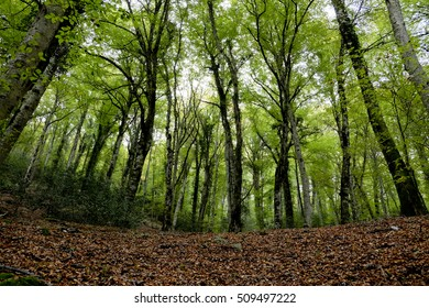The Umbra Forest in Gargano National Park, Puglia, Italy