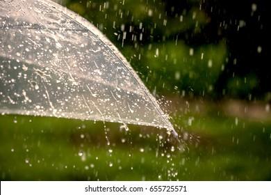 Umbrella in the rain in green nature background