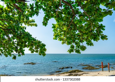 Umbrella tree at sand beach of tropical sea. Summer vacation at the beach. Branches of tree and green leaves at tropical paradise beach and sky. Summer vibes. Nature background. Calm and peaceful.