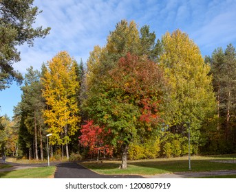 UMEA, SWEDEN ON AUGUST 28. View of colorful trees, path and pathways in a residential area on August 28, 2018 in Umea, Sweden. Unidentified person far away.