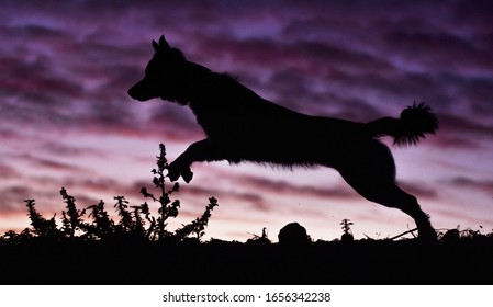 ump of a dog in a beautiful sunset