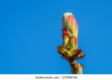un blown bud on a branch close up