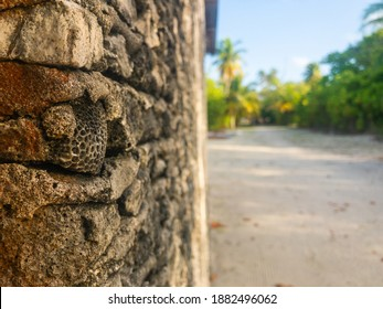 un habitat island wall made with local sea coral when Britis was ruled, wall Corel was focused and background blur taken in Maldives.
