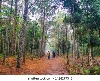Unacquainted Tourist waiting on Nature trail in the morning on Phu Kradueng mountain national park in Loei City Thailand.Phu Kradueng mountain national park the famous Travel destination