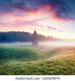 Unbelievable summer sunrise in Durmitor Nacionalni Park. Splendid foggy view of Montenegro countryside, Zabljak town location. Beautiful world of Mediterranean countries. Traveling concept background.