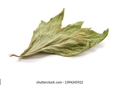 unbroken leaf dry lovage on a white background