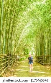 An Uncharted and Beautiful Bamboo Forest Similar with The One at Arashiyama (Kyoto) in A small Aboriginal Tribe at Taian, Miaoli, Taiwan