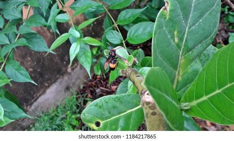 uncommon beautiful fly