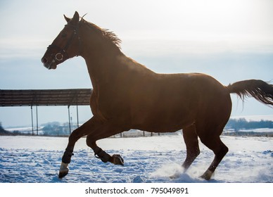 The uncontrollable gallop of a strong stallion.