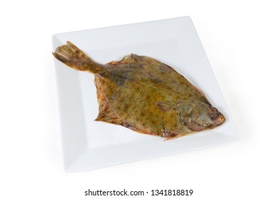 Uncooked European plaice also known as flatfish on white square dish on a white background