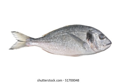 Uncooked fish (sparus auratus) isolated against a white background