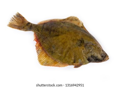 Uncooked plaice also known as flatfish on a white background