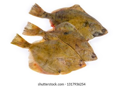 Uncooked plaices also known as flatfish laid out upper sides on a white background