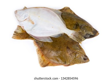 Uncooked plaices also known as flatfish laid out with different sides on a white background