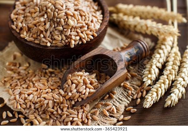 Grains entiers d'épeautre non cuits dans un bol avec une cuillère en bois et des épis sur la table