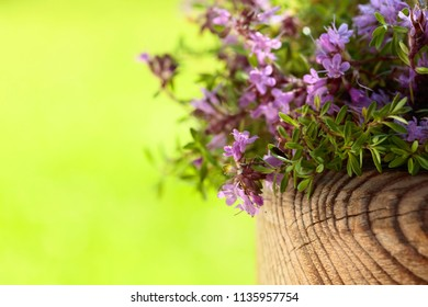 Uncultivated flowering thyme is used in cooking, medicine and perfumery. Copy space for your text.