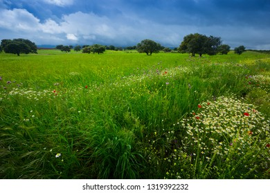 uncultivated green field with field flowers and storm heavy clouds