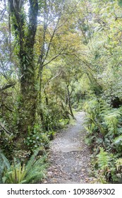 Uncultivated lush forest with a narrow path on Mt. Cargill in Dunedin, New Zealand