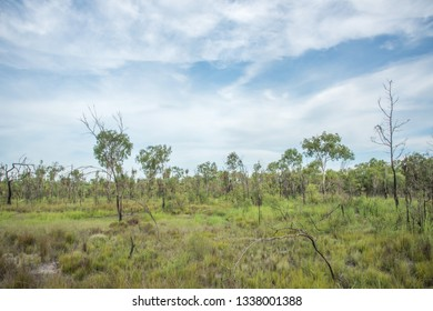 Uncultivated natural flora under a blue sky with clouds in the native bushland at Knuckeys Lagoon Conservation Reserve in the Northern Territory of Australia