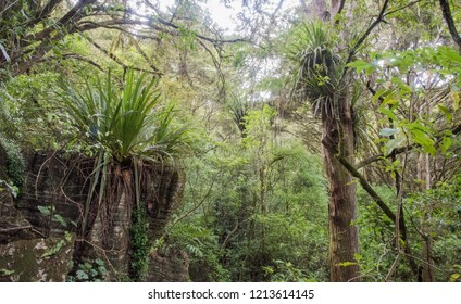 Uncultivated rainforest growth in remote Kawakawa, New Zealand