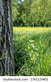 An uncut meadow with wild grass in spring.