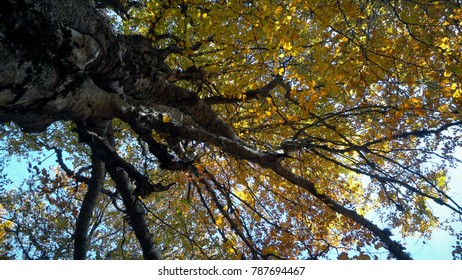 Under beautiful autumn forest tree with sun shining