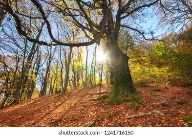 Under big autumn tree in forest. Nature composition.