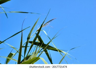 Under the blue autumn sky, green grasses fly. High quality photo
