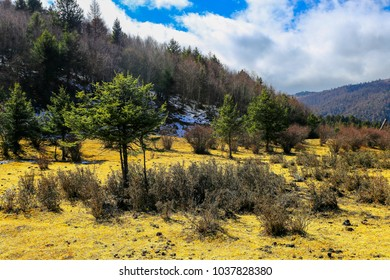 Under the blue sky, the grass on the forest is covered with snow in Yunnan Province, China