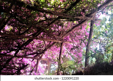 Under a Bougainvilliers shadow