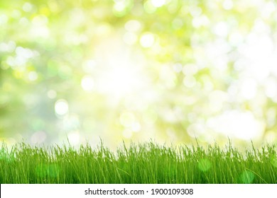 Under the bright sun. Abstract natural background with green grass and bokeh in green spring park.