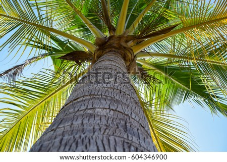under coconut tree background stock photo edit now 604346900