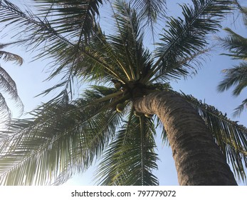 Under the coconut tree on blue sky background.Summer vacation concept.